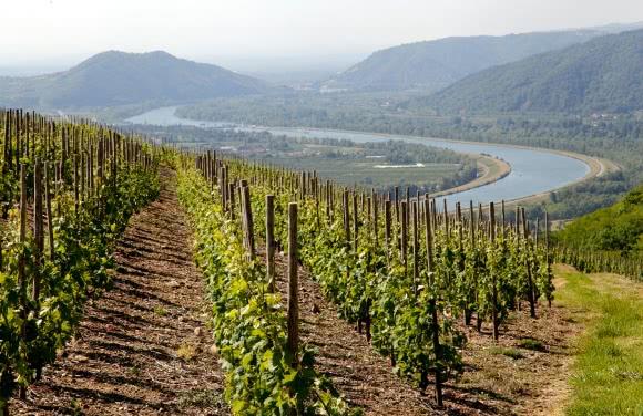Photo d'un vignoble des Côtes du Rhône autour de Tain l'Hermitage (26)