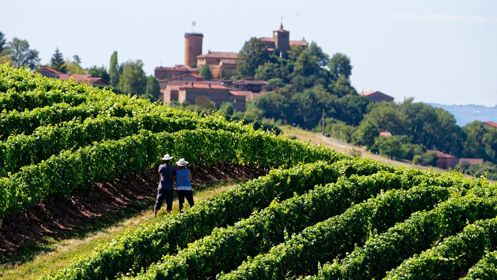 Photo d'un vignoble du Beaujolais, autour d'Oingt (69)