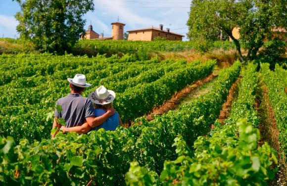 Vignoble du Beaujolais, autour d'Oingt (69)