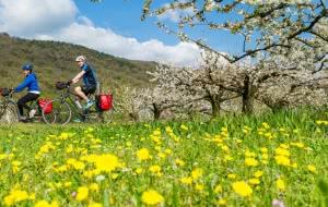 Cyclistes sur la ViaRhôna au printemps