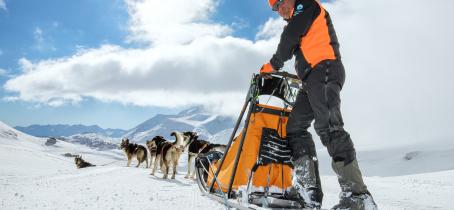 à Aussois, pratiquez la conduite d'attelage de chiens de traineau avec Husky Adventure