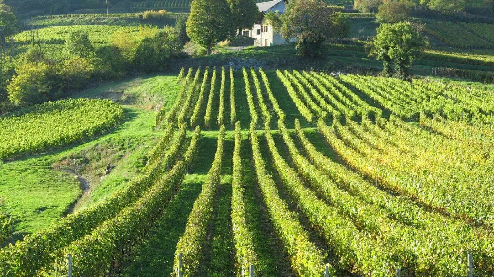 Les vignobles d'Apremont