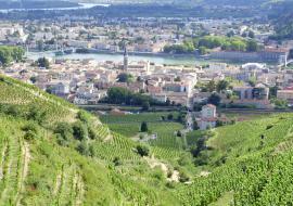 Journée vin chocolat et vignobles de l'Hermitage