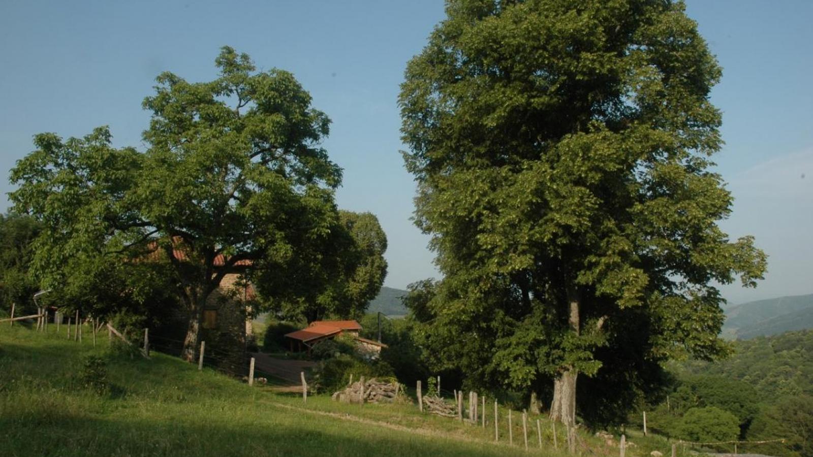 les Chambres d'Hôtes 'Les Fées du Fay' se situent en pleine nature - Beaujolais - Rhône.