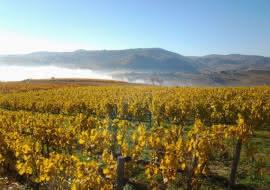 Journée Découverte Beaujolais Auberge de Clochemerle