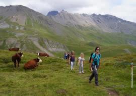 Alpage et randonnée - Val Cenis