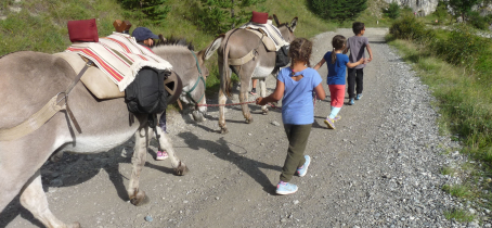 Donkeys and Hiking in Aussois