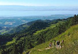 Montée du Mont Forchat