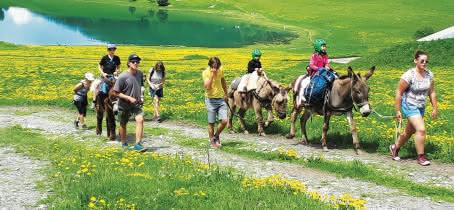 Balade avec les galopins âne ou poney au Grand-Bornand