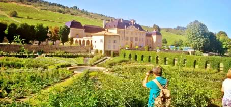 Le vignolble Beaujolais